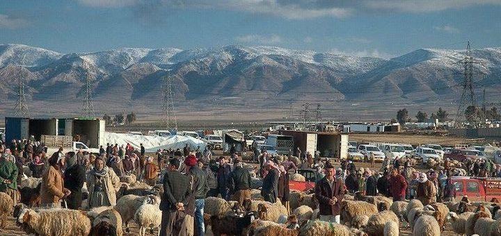 Michaël Thevenin, Marché aux moutons de Simmel, gouvernorat de Duhok, février 2017